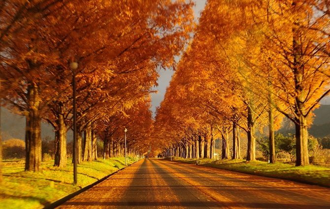 秋色のピストバイクなんていかがですか?!